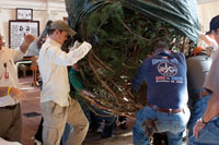 Arrival of capitol christmas trees